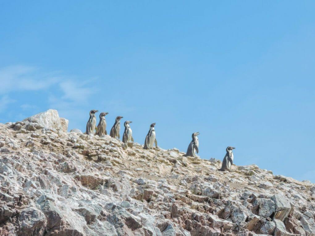 Paracas Peru - Islas Ballestas