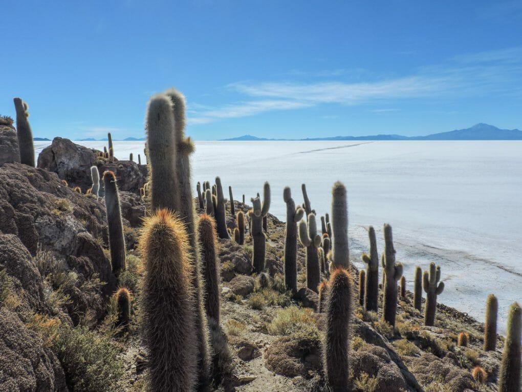 Incahuasi Island Uyuni Bolivia Cactus_