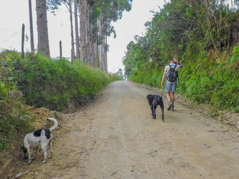 El Mocambo Dogs I 5 Things to See in Salento
