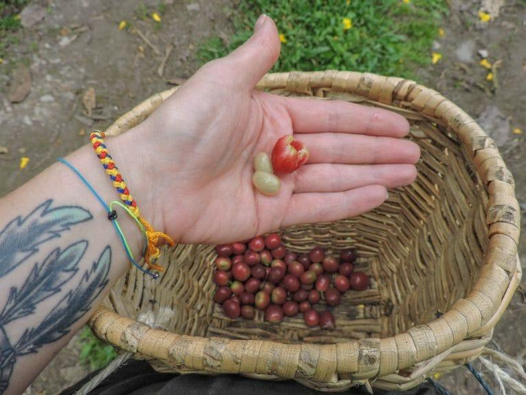 Finca El Ocaso Farm I 5 Things to See in Salento