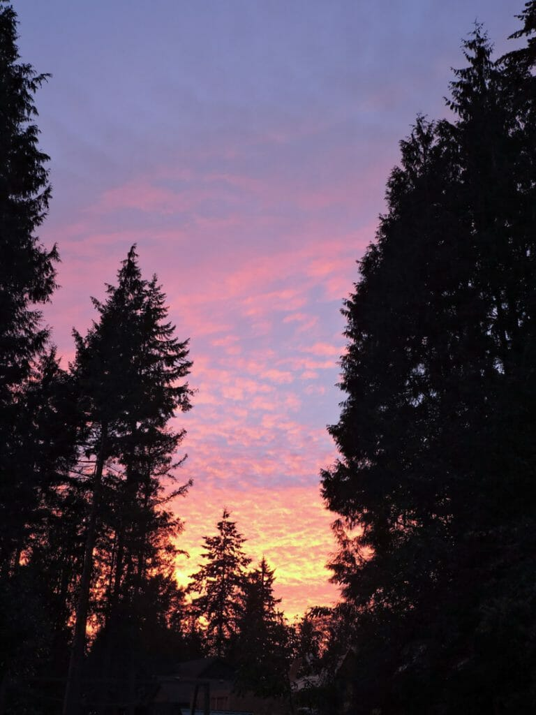 Roberts Creek Provincial Parktrees with striking sunset of orange and pink