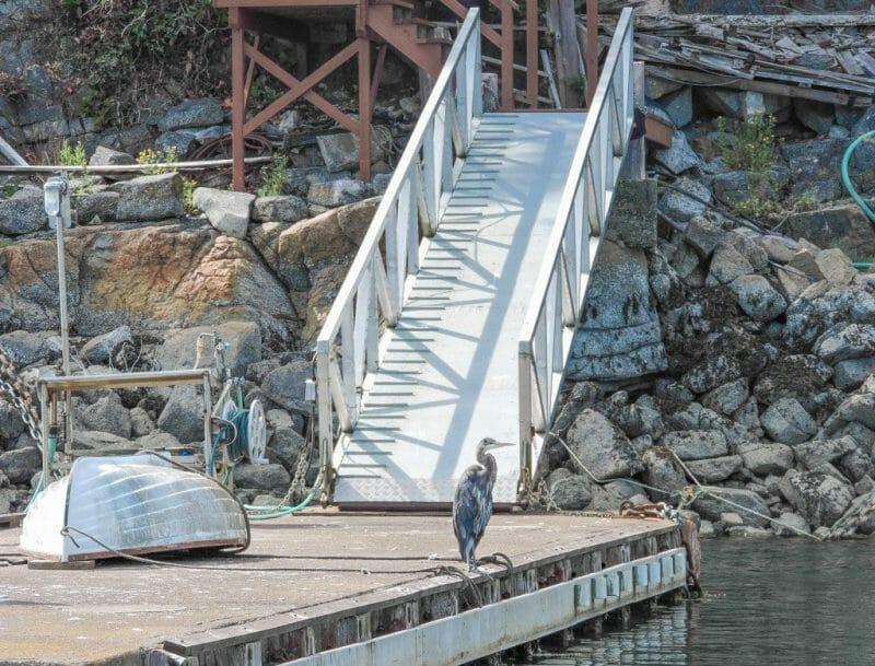 Slocat Harbour Tours Pender Harbour