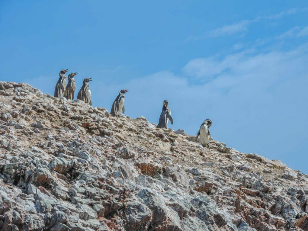 Isla Ballestas and Paracas I Three Weeks in Peru Itinerary