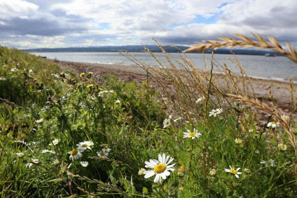 Chanonry Point Scottish Highland NC500