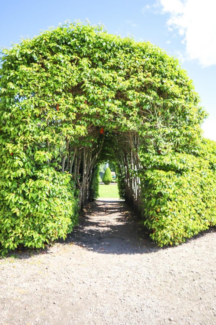Dunrobin Castle Tree Tunnell North Coast 500 Scotland_