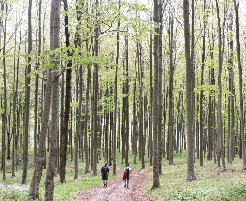 Craig and friend hiking in Hungarian, near Eger. Trees, red path
