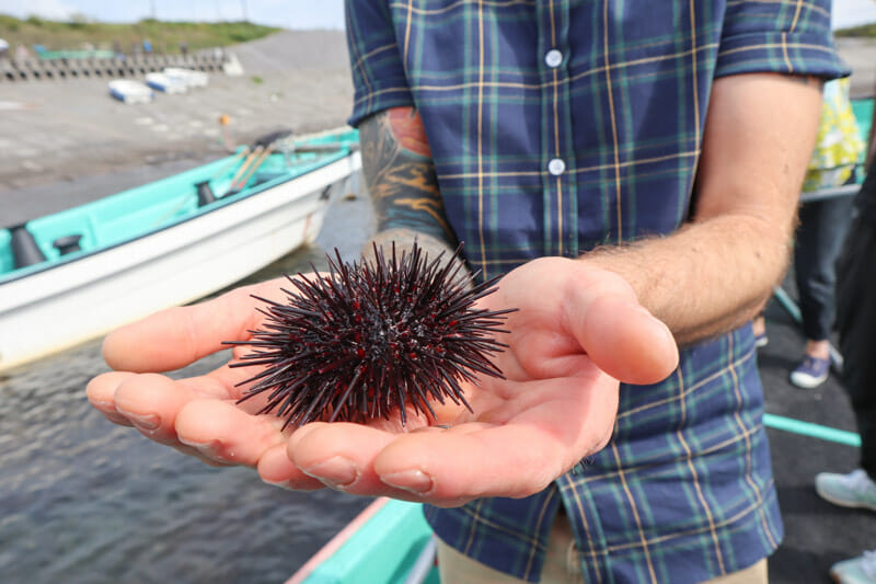 Sea Urchin boat Kamui Kaigan Park Irishi Japan_