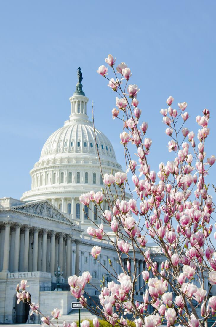 Washington DC. Cherry Blossom