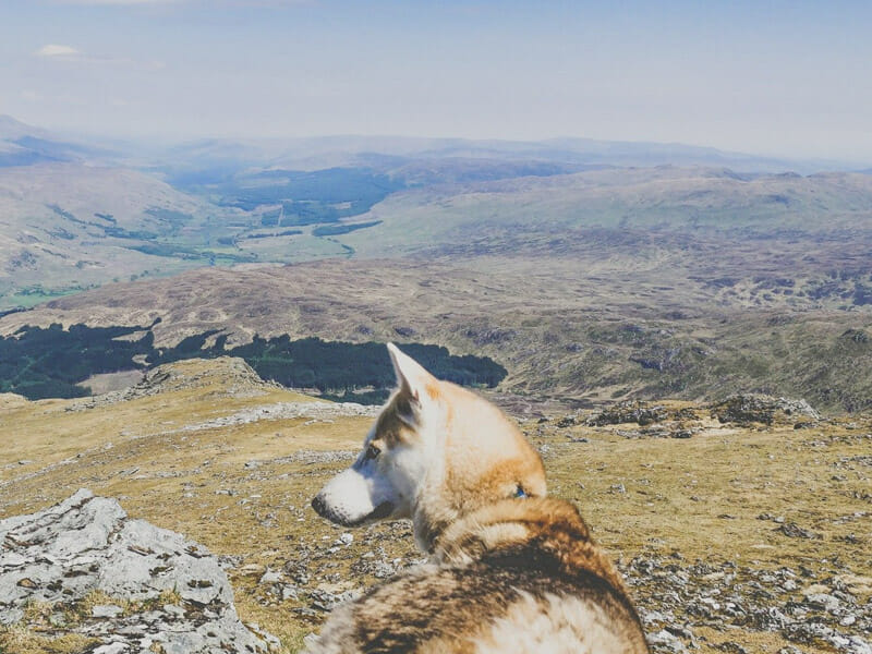 Ben More with Bowie_