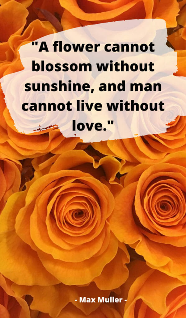 Sunshine quotes, quotes about sunshine, positive quotes, inspirational quotes, motivational quotes, sunny, beach, wellness, self help, calm, happy, smile, Instagram captions. #Motivational #Sunshine #Quotes