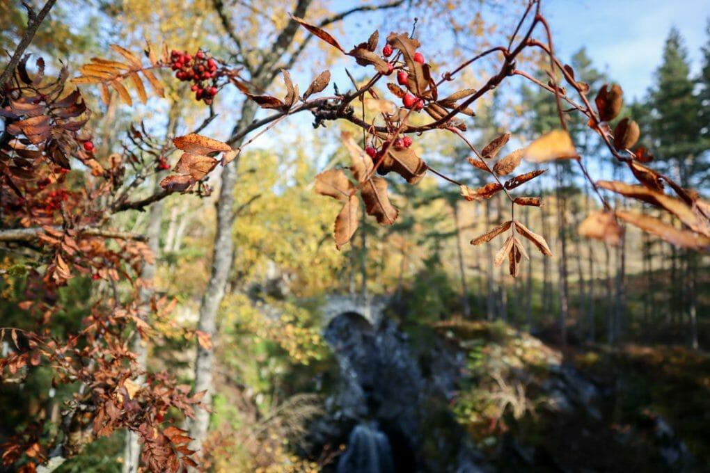 Falls of Bruar Trees Perthshire