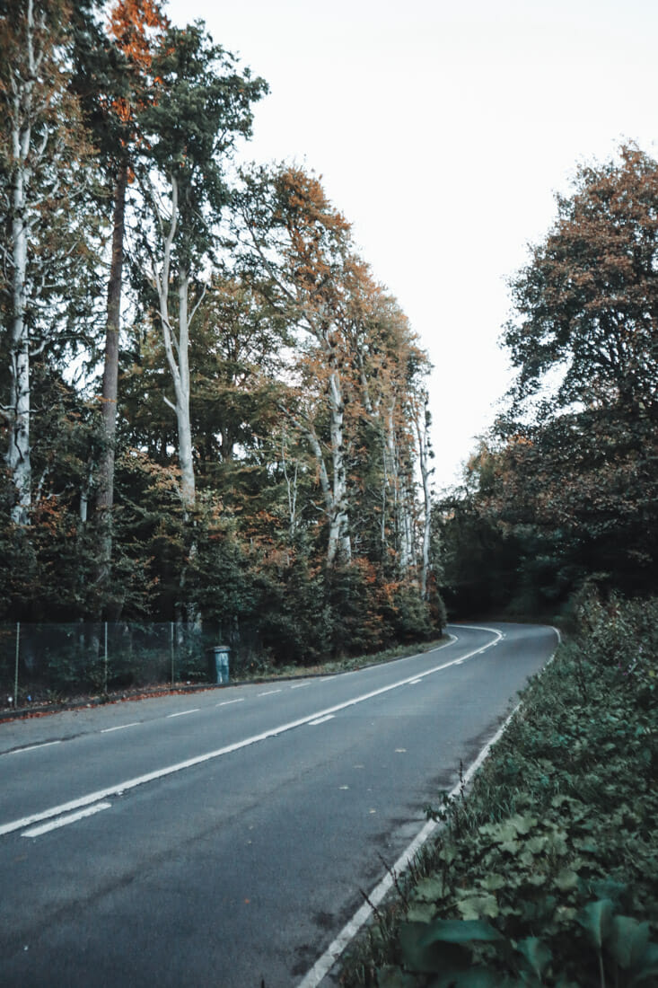 Meikleour Beech Hedge in Perthshire
