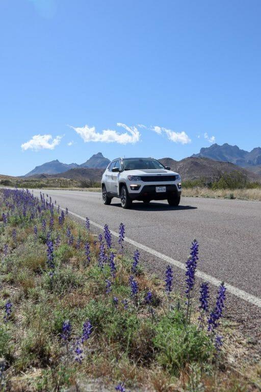 Big Bend National Park Road Bluebonnets Car