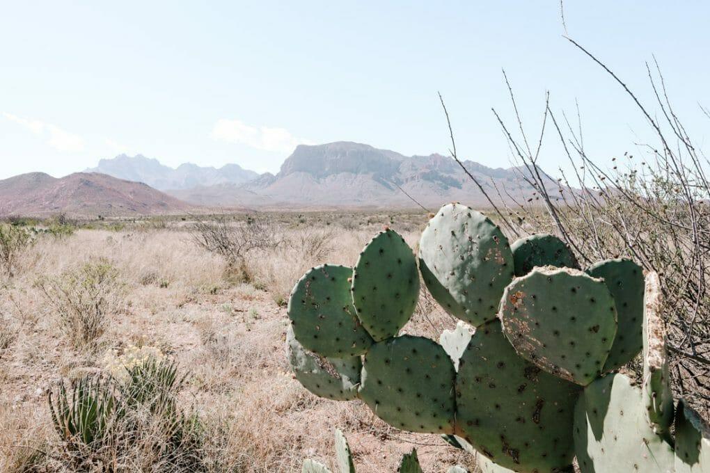 Mountains Big Bend National Park Cactus