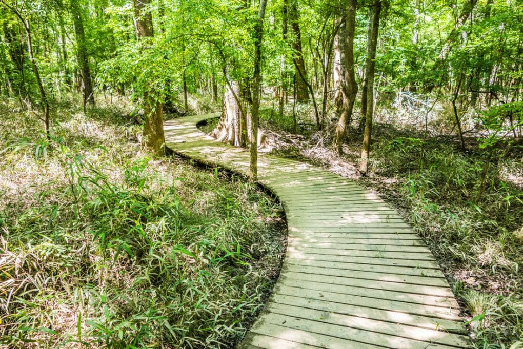 Cypress forest swamp of Congaree National Park in South Caro
