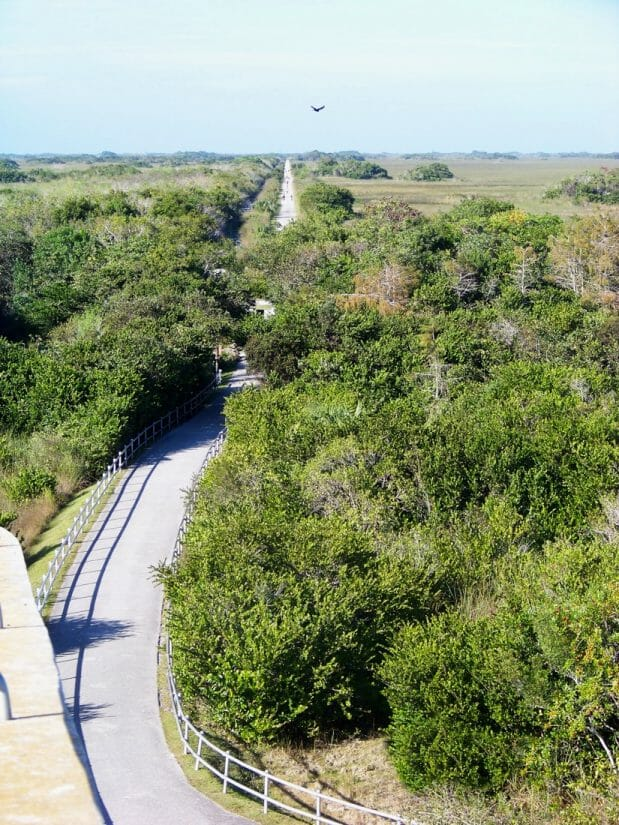 Tram Road Trail to Shark Valley Observation Tower in Everglades National Park in Florida.