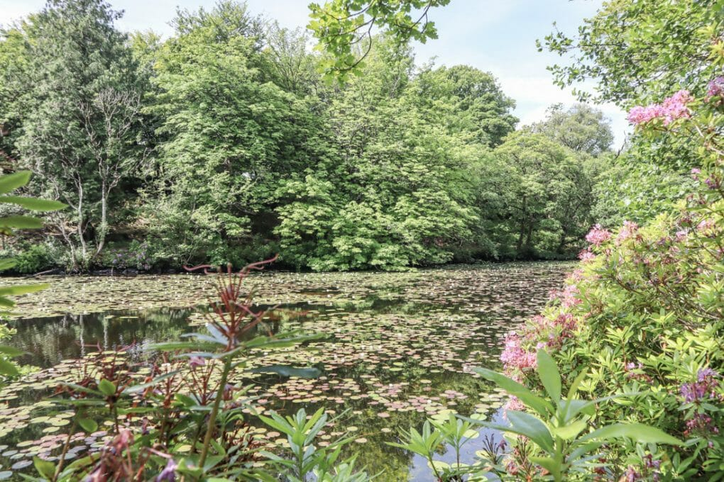 Aros Park Pond Mull Scotland