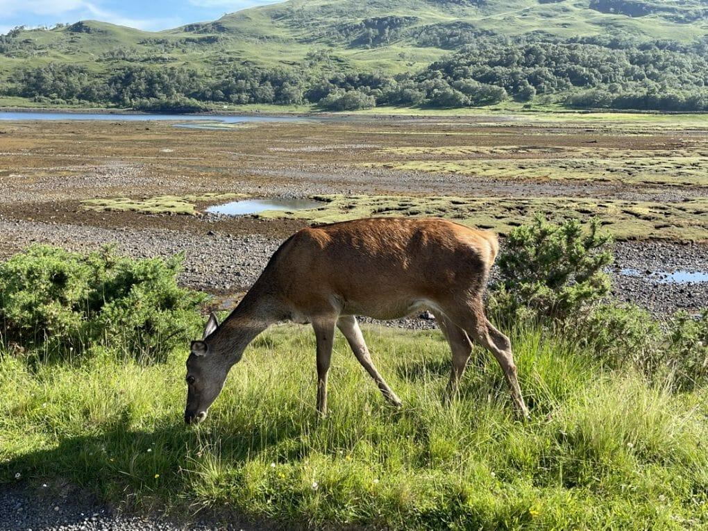 Deer Mull Scotland