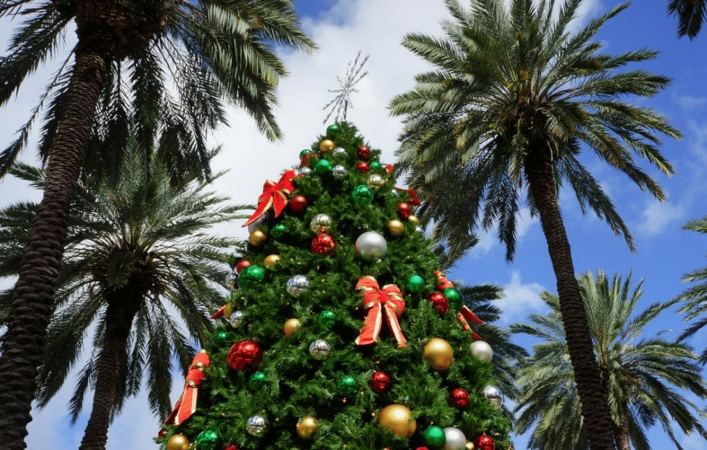 Christmas in Miami - Christmas tree with palm trees